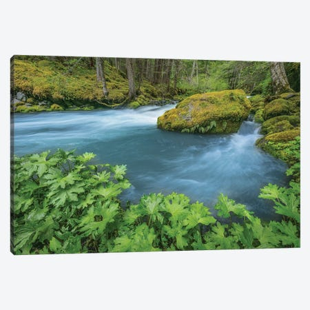 USA, Washington State, Olympic National Forest. Royal Creek landscape.  Canvas Print #JYG782} by Jaynes Gallery Canvas Wall Art