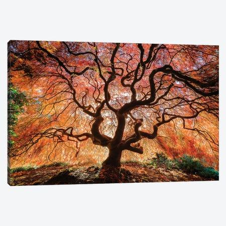 USA, Washington, Seattle, Kubota Japanese Garden. Japanese maple tree in autumn.  Canvas Print #JYG789} by Jaynes Gallery Canvas Artwork
