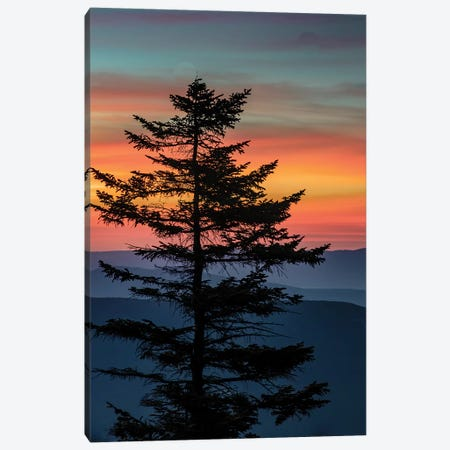 USA, West Virginia, Blackwater Falls State Park. Tree and landscape at sunset.  Canvas Print #JYG794} by Jaynes Gallery Canvas Artwork