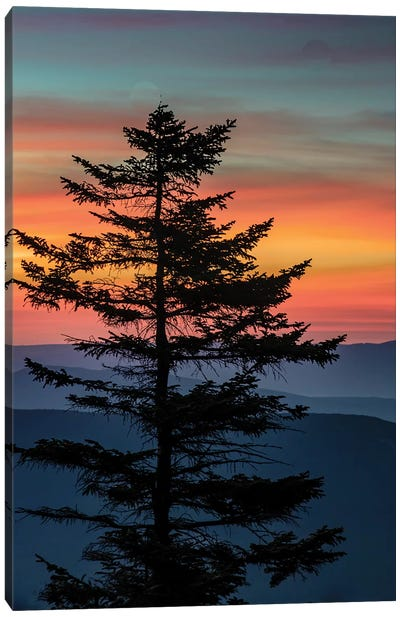 USA, West Virginia, Blackwater Falls State Park. Tree and landscape at sunset.  Canvas Art Print