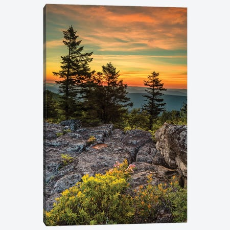USA, West Virginia, Blackwater Falls State Park. Tree and landscape at sunset.  Canvas Print #JYG795} by Jaynes Gallery Canvas Artwork