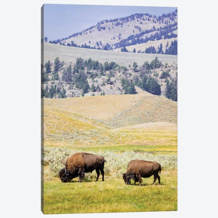 USA, Wyoming, Yellowstone National Park. Two buffalos in grassy field. Canvas Print #JYG804} by Jaynes Gallery Canvas Art
