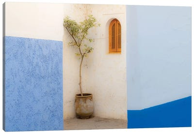 Africa, Morocco, Asilah. Potted Tree And Painted Walls. Canvas Art Print