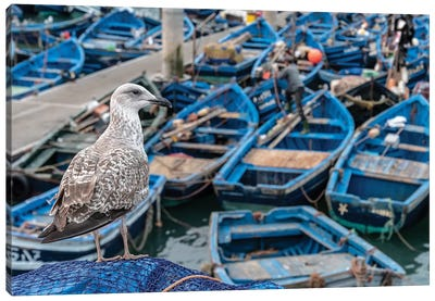 Africa, Morocco, Essaouira. Close-Up Of Seagull And Moored Boats. Canvas Art Print