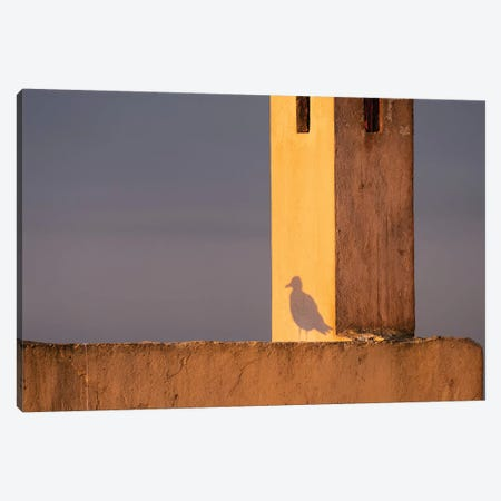 Africa, Morocco, Essaouira. Shadow Of Seagull At Sunrise. Canvas Print #JYG818} by Jaynes Gallery Canvas Wall Art