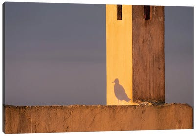 Africa, Morocco, Essaouira. Shadow Of Seagull At Sunrise. Canvas Art Print