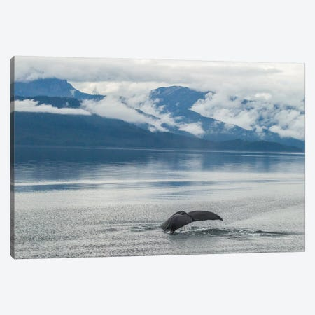 USA, Alaska, Tongass National Forest. Humpback whale diving. Canvas Print #JYG81} by Jaynes Gallery Canvas Wall Art