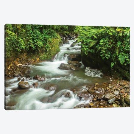 Costa Rica, La Paz River Valley. Rainforest Stream In La Paz Waterfall Garden. 3-Piece Canvas #JYG840} by Jaynes Gallery Canvas Print