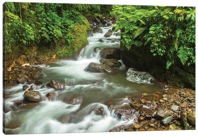 Costa Rica, La Paz River Valley. Rainforest Stream In La Paz Waterfall Garden. Canvas Art Print