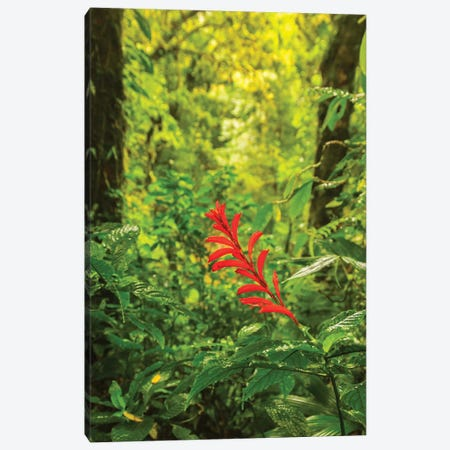 Costa Rica, Monte Verde Cloud Forest Reserve. Rainforest Scenic. Canvas Print #JYG859} by Jaynes Gallery Canvas Artwork
