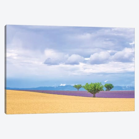 Europe, France, Provence, Valensole Plateau. Lavender And Wheat Crops And Trees. Canvas Print #JYG913} by Jaynes Gallery Canvas Print