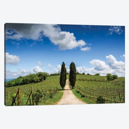 Europe, Italy, Tuscany, Chianti. Vineyard And Cypress Trees. Canvas Print #JYG926} by Jaynes Gallery Art Print