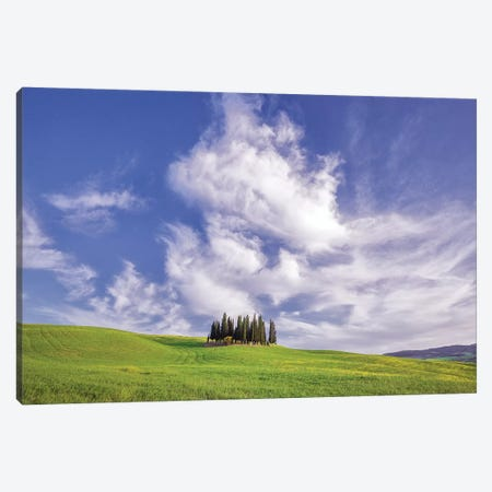 Europe, Italy, Tuscany, Val D' Orcia. Cypress Grove In Landscape. Canvas Print #JYG927} by Jaynes Gallery Art Print