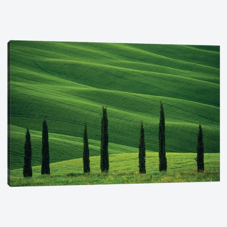 Europe, Italy, Tuscany, Val D' Orcia. Cypress Trees And Wheat Field. Canvas Print #JYG928} by Jaynes Gallery Canvas Art