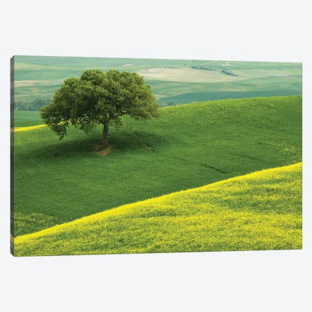 Europe, Italy, Tuscany. Hilly Landscape. Canvas Print #JYG929} by Jaynes Gallery Canvas Wall Art