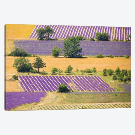 France, Provence, Sault Plateau. Overview Of Lavender Crop Patterns And Wheat Fields. Canvas Print #JYG939} by Jaynes Gallery Art Print