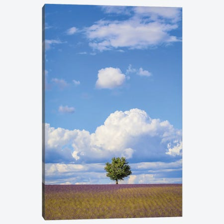 France, Provence, Valensole Plateau. Field Of Lavender And Tree. Canvas Print #JYG941} by Jaynes Gallery Canvas Artwork