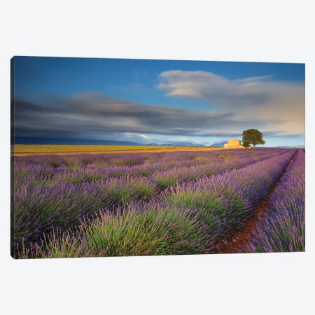 France, Provence, Valensole Plateau. Lavender Rows And Farmhouse. Canvas Print #JYG944} by Jaynes Gallery Canvas Print