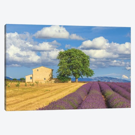 France, Provence, Valensole Plateau. Lavender Rows And Farmhouse. Canvas Print #JYG945} by Jaynes Gallery Art Print