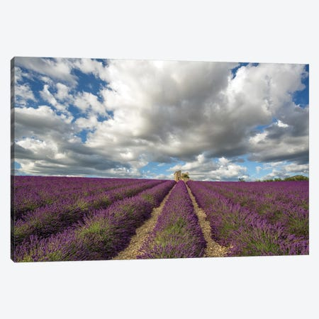 France, Provence, Valensole Plateau. Lavender Rows And Stone Building Ruin. Canvas Print #JYG946} by Jaynes Gallery Canvas Art Print