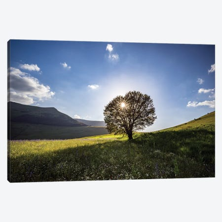 Italy, Castelluccio, Piano Grande. Backlit Tree At Sunset. Canvas Print #JYG970} by Jaynes Gallery Canvas Print