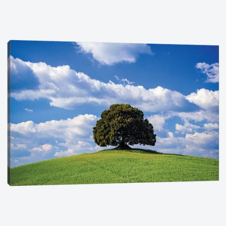 Italy, Tuscany, Val D'Orcia. Tree On Hilltop. Canvas Print #JYG983} by Jaynes Gallery Canvas Art