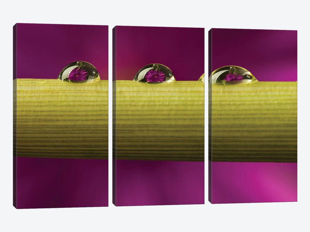 USA, California, Los Osos. Water droplets on stem. by Jaynes Gallery 3-piece Canvas Print