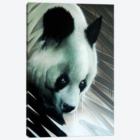 Panda Canvas Print #JYN39} by JAYN Canvas Wall Art