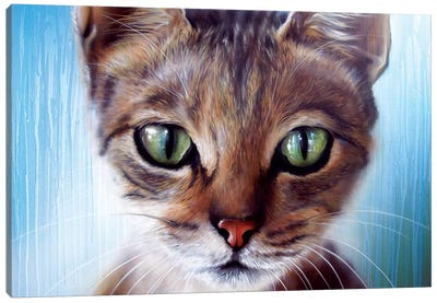 Cateye Canvas Art Print