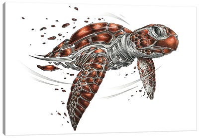 Turtle by JAYN Canvas Art Print