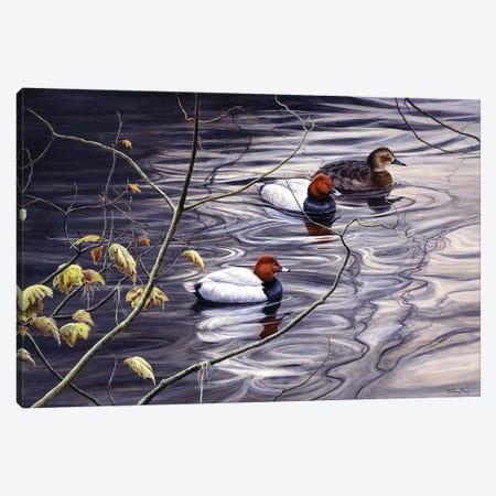 Pochard Canvas Print #JYP101} by Jeremy Paul Canvas Art