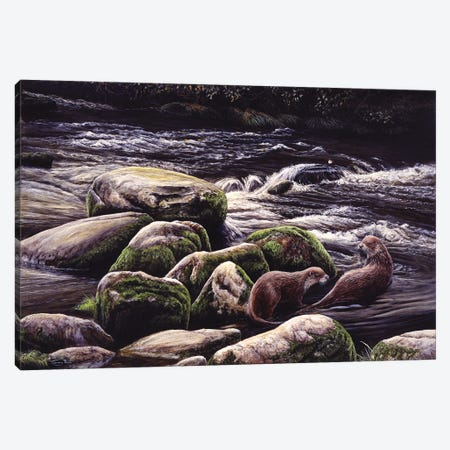 Running Waters - Otters And Dipper Canvas Print #JYP102} by Jeremy Paul Canvas Wall Art