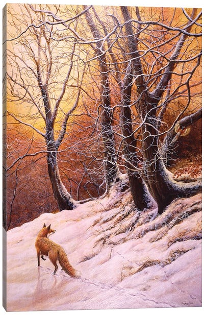 Winter Glow - Fox And Pheasant Canvas Art Print