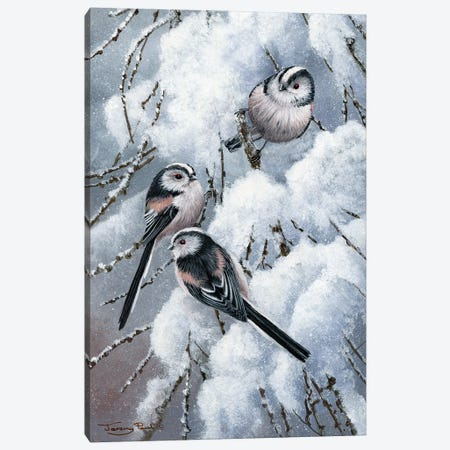 Long Tailed Tits Canvas Print #JYP10} by Jeremy Paul Canvas Art