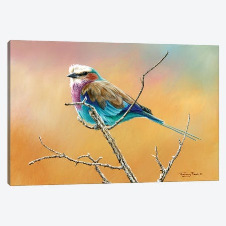 Lilac Breasted Roller Canvas Print #JYP11} by Jeremy Paul Canvas Art