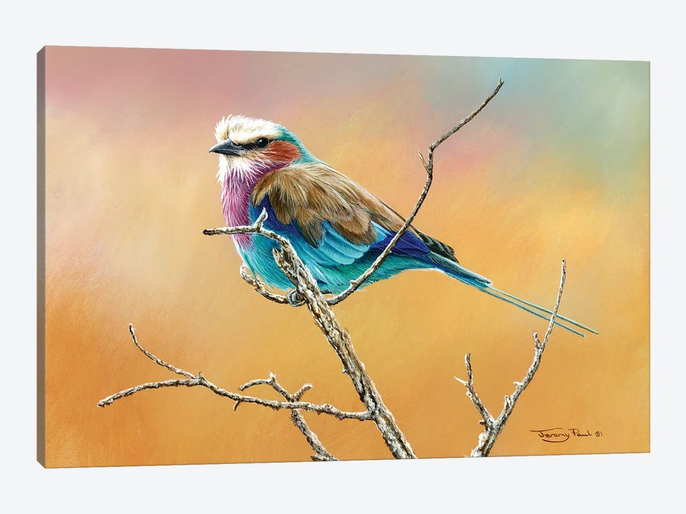 Lilac Breasted Roller by Jeremy Paul 1-piece Canvas Art Print