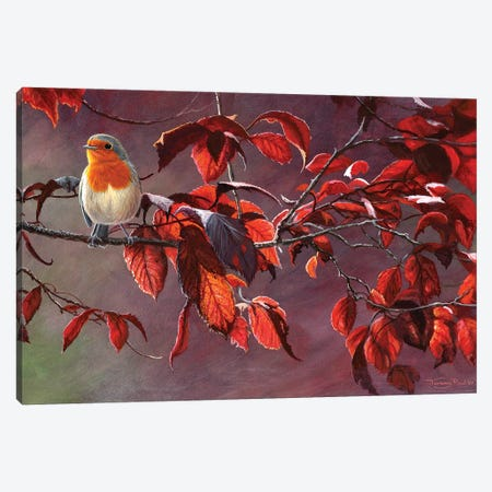 Robin Canvas Print #JYP12} by Jeremy Paul Canvas Art