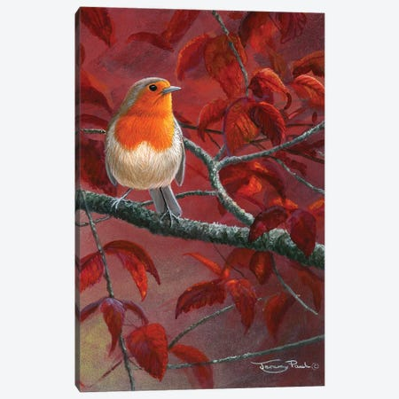 Red Leaves - Robin Canvas Print #JYP14} by Jeremy Paul Art Print