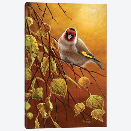 Goldfinch Canvas Print #JYP17} by Jeremy Paul Art Print