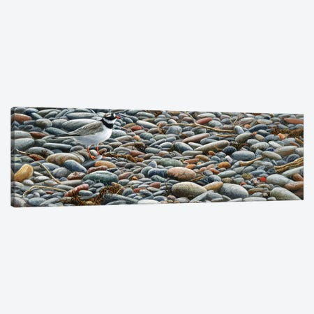 Pebbles - Ringed Plover Canvas Print #JYP18} by Jeremy Paul Canvas Artwork
