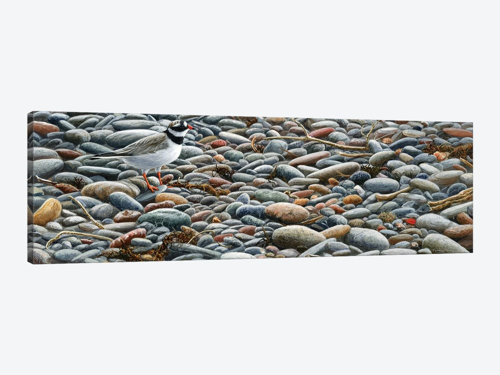 Pebbles - Ringed Plover by Jeremy Paul 1-piece Canvas Artwork
