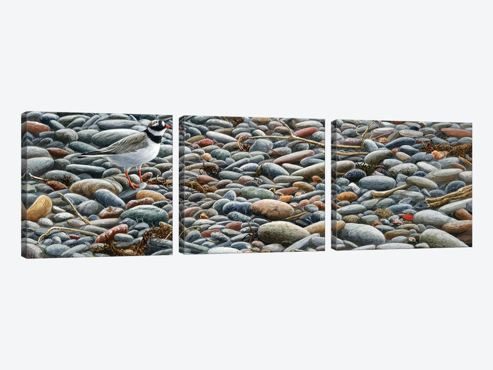 Pebbles - Ringed Plover by Jeremy Paul 3-piece Canvas Artwork