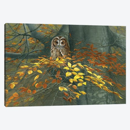 Tawny Owl Autumn 3-Piece Canvas #JYP1} by Jeremy Paul Canvas Art Print