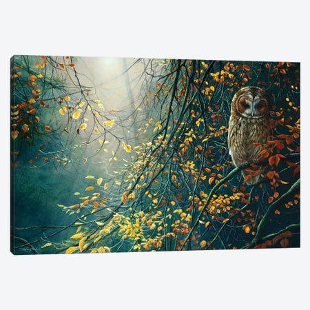 Tawny Owl Canvas Print #JYP20} by Jeremy Paul Canvas Print