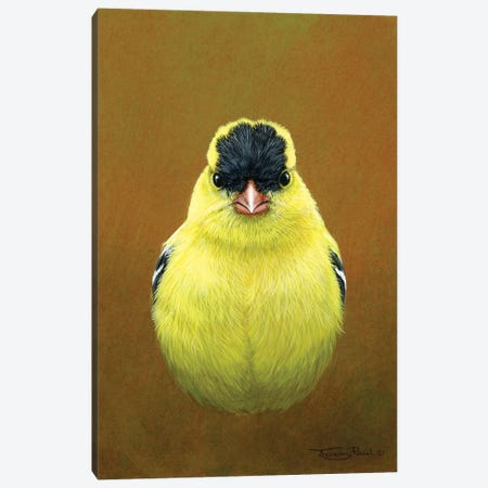 American Goldfinch Canvas Print #JYP21} by Jeremy Paul Art Print