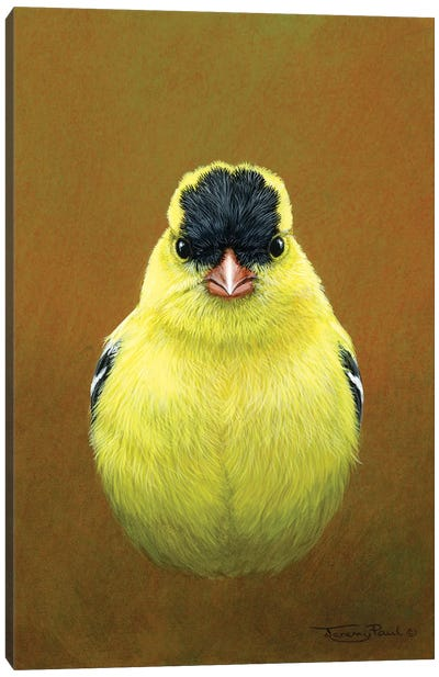 American Goldfinch Canvas Art Print