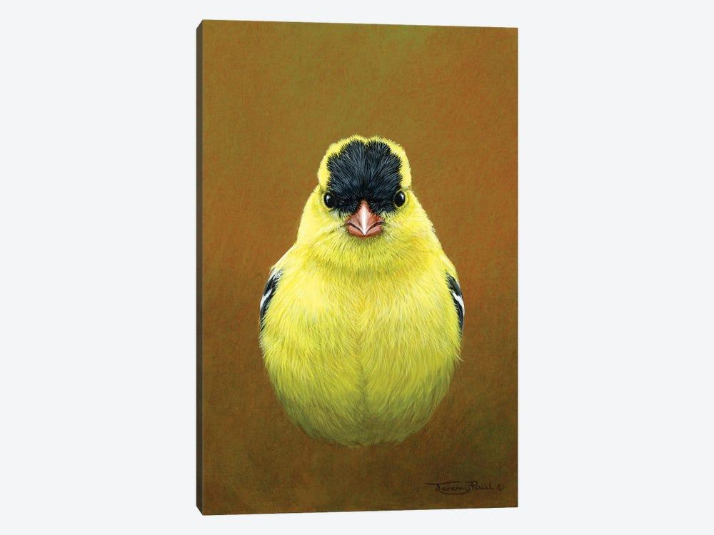 American Goldfinch by Jeremy Paul 1-piece Canvas Art
