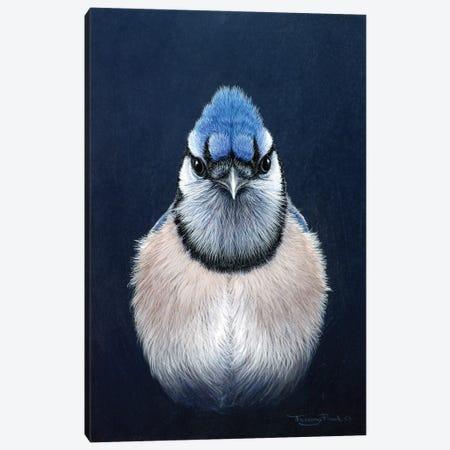 Blue Jay Canvas Print #JYP22} by Jeremy Paul Canvas Print