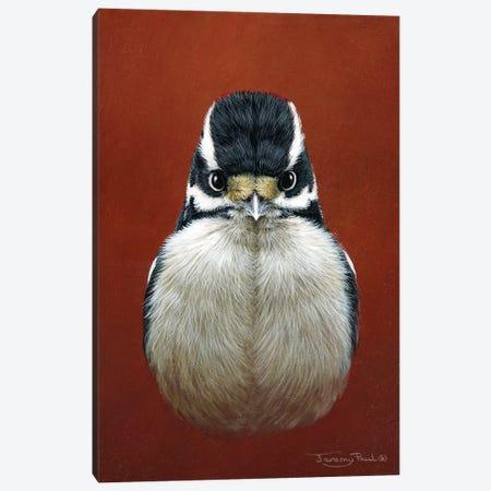 Downy Woodpecker Canvas Print #JYP25} by Jeremy Paul Canvas Art