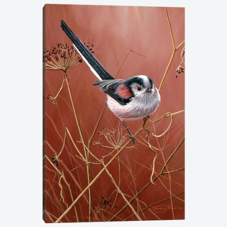 Long Tailed Tit Canvas Print #JYP27} by Jeremy Paul Canvas Wall Art